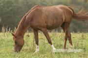 Помогите найти лошадей!